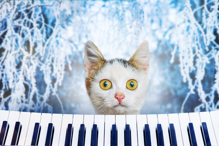A small white kitten on a winter background with a funny look near the piano. Advertising of musical instruments