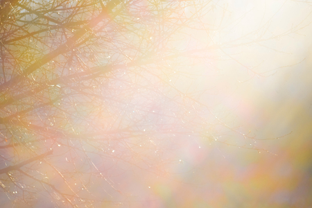 The background, a lining with  trees, lit with bright sunlight Imagens