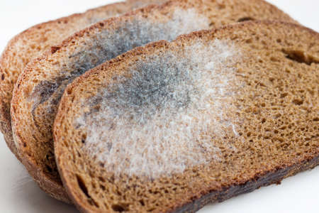 Slices of stale bread with mildew. Spoiled products