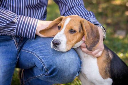 A man caress a puppy of breed an Estonian hunch
