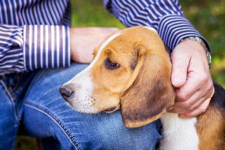 A man caress a puppy of breed an Estonian hound