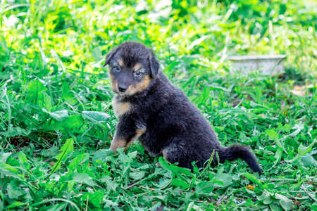 A small black puppy sits on the grass next to a plate of food