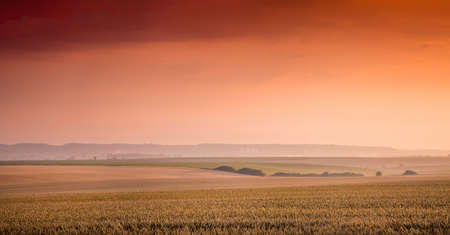 Rural landscape: a wheat field and a red-orange sky at sunset Foto de archivo
