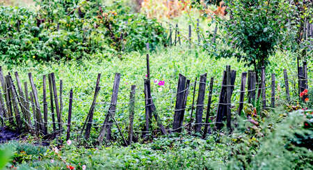 Bed in the garden, fenced with a palisade. Countryside