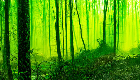 Misty morning in the spring forest. Mystic fairy-tale forest in the morning. Tinting in green Archivio Fotografico