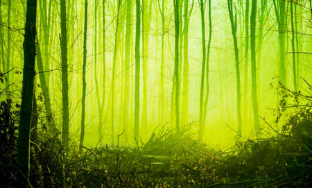 Autumn forest in the morning fog in bright green tones