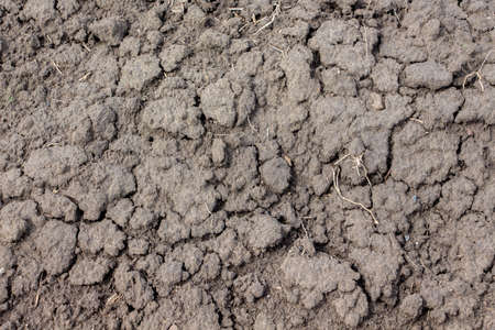 Texture of dry soil with cracks, background for design