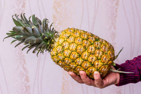 A man holds a ripe tasty pineapple in his hand
