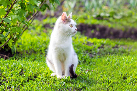 A white cat sits in the garden on the grass in sunny weather 写真素材