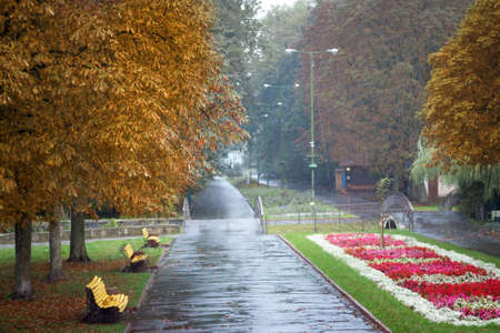 Rainy autumn day in the city park. Red flowers in the park in the fall Zdjęcie Seryjne