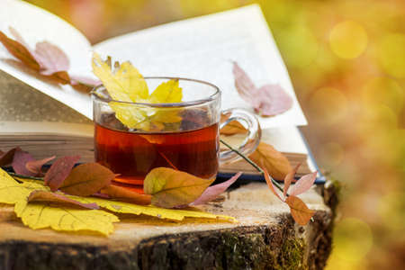 A maple leaf fell into a cup of tea, which stands in the woods on a stump near the book in the fall. Recreation and reading in the woods