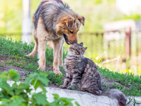A cat and a dog next to the green grass in the summer. Cat and dog are friends