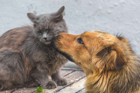 A dog licks a cat's muzzle. Friendly dog and cat relationship