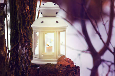 Lantern with candle in forest near tree in evening. Christmas night in the forest with lantern light 版權商用圖片