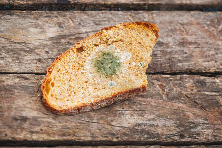 Mildew on a slice of bread, lying on a wooden surface. Stale bread, covered with mildew 新聞圖片