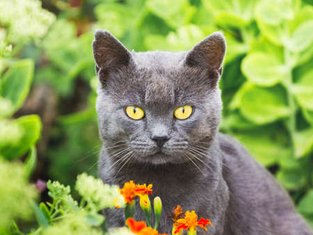 A dark gray cat with yellow eyes looks straight into the camera