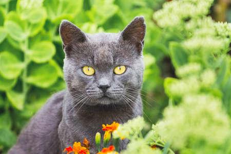 Dark gray cat with yellow eyes in flower garden, closeup portrait