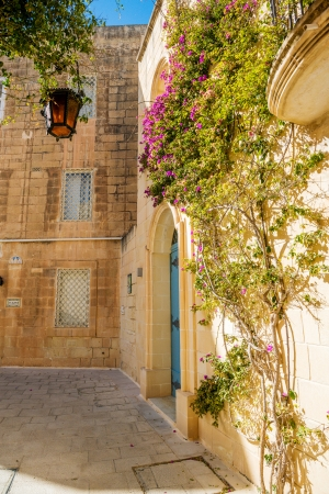 Mdina courtyard with fuchsiaflowers, malta photo