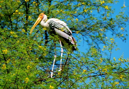 Painted stork bird sitting on a tree Stock Photo