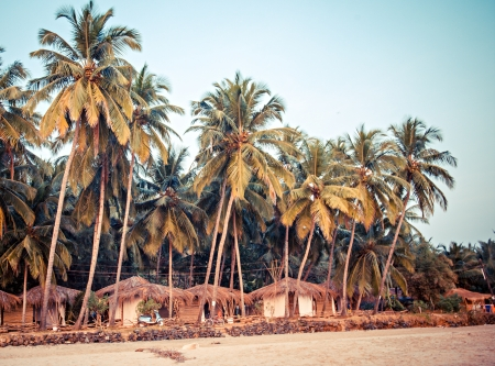 Palm trees and reed huts on a beach at sunset, Goa, India photo