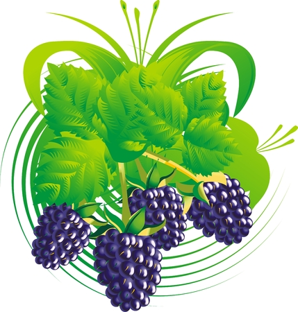 Berries and leaves of a blackberry against a vegetative ornament