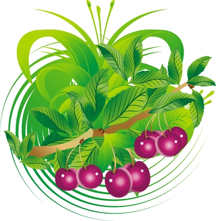 Fruits and cherry leaves hanging on a branch in an ornament environment Vector