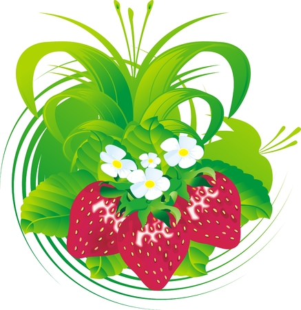 Fruits and flowers of a strawberry against a vegetative ornament and leaves Vector