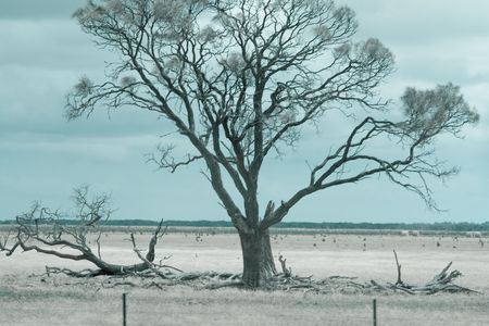 desecrated: A parched tree Stock Photo