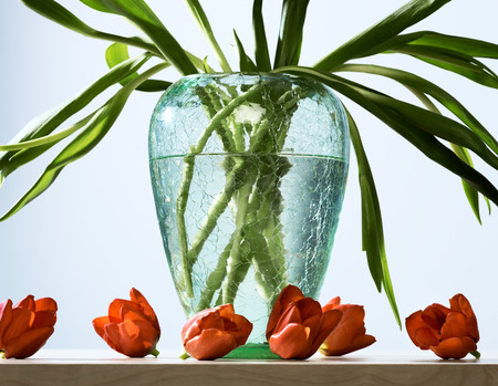 Conceptual rejection or anger image of glass flower vase with cut red tulip blossoms on tabletop.
