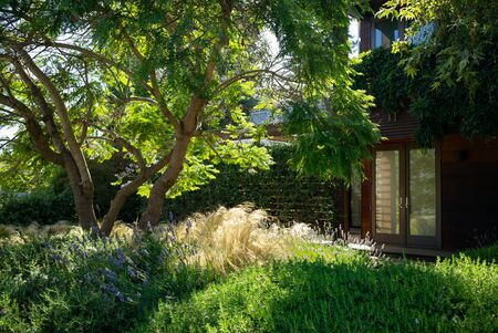 Beautiful California home with a natural grown landscape design featuring tall grasses and drought-tolerant ground-cover
