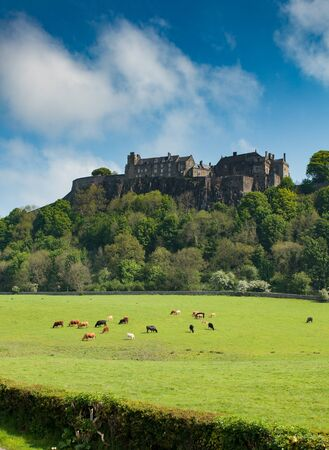 A Scottish castle stands sentry over a field of grazing cattle in central Scotland taken in May, 2012.