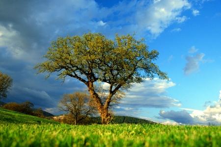 albero: PERUGIA, ITALIA - GIUGNO 1998 - UN RAGGIO DI SOLE ILLUMINA QUESTO ALBERO PRIMA DELL ARRIVO DEL TEMPORALE