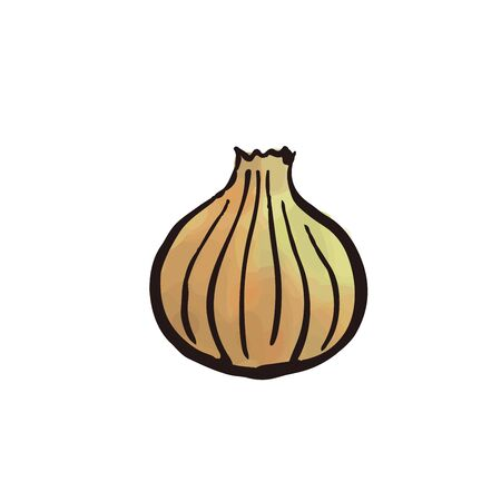vegetable -onion watercolor