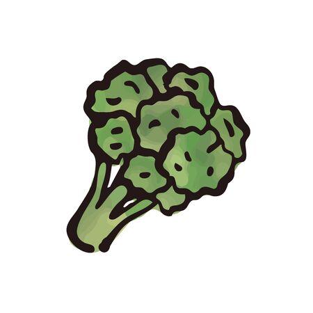 vegetable - broccoli watercolor
