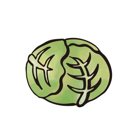 vegetable - cabbege watercolor