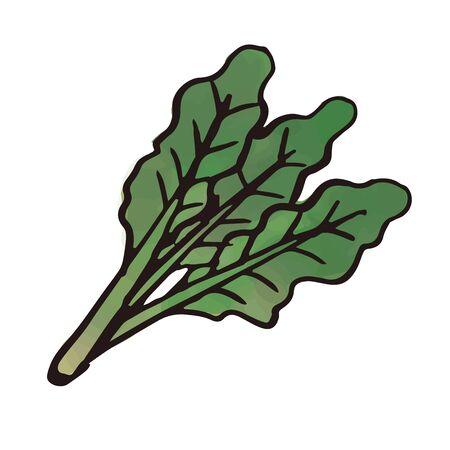 vegetable - spinach Ilustração Vetorial