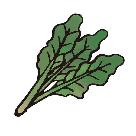 vegetable - spinach Иллюстрация