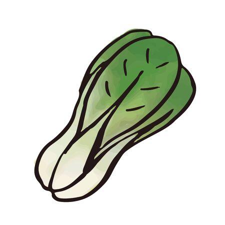 vegetable - bok choy