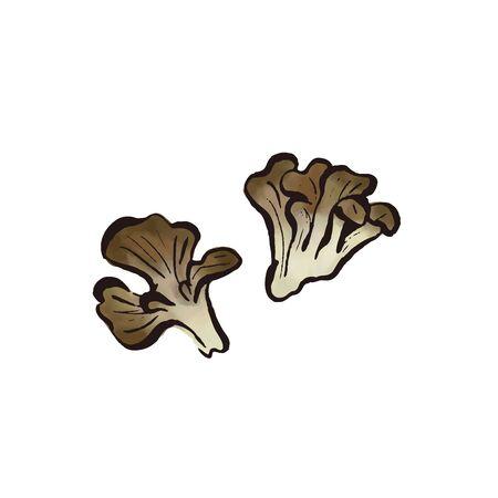 vegetable -fresh japanese make mushrooms (watercolor vector)