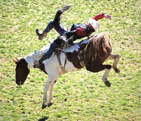 bucking horse: Rodeo cowboy at Pendleton Round-Up in Pendleton, Oregon, barely stays atop airborne bucking horse