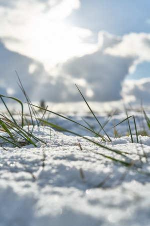 Winter grass in landscape the snow field snow nature