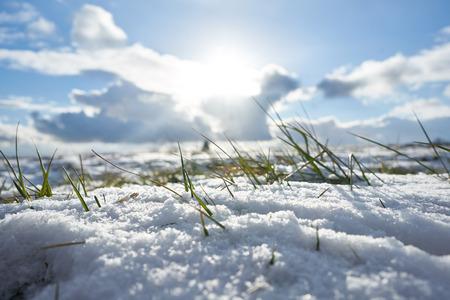 Winter gras in landschap het sneeuwveld sneeuw natuur Stockfoto