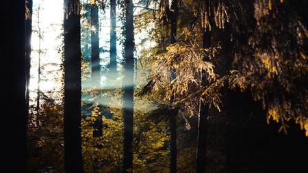 Sonnenstrahlen gießen durch Bäume im Wald, Lichtstrahlen Lizenzfreie Bilder
