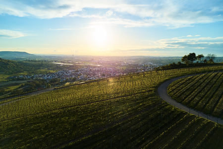 vineyards landscape on the hill from top with drone, dji