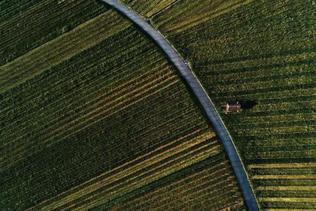 Weinberge Landschaft auf dem Hügel von oben mit Drohne, Dji