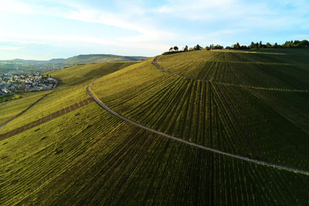 wine road: vineyards landscape on the hill from top with drone, dji