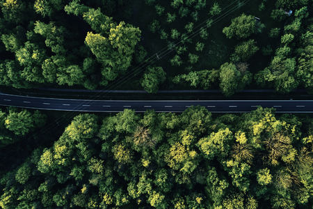 wine road: street between large trees from top with drone aerial view, landscape