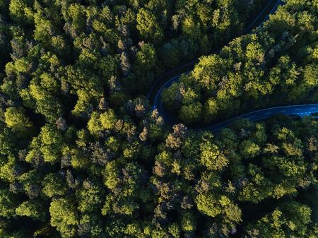 Straße zwischen großen Bäumen von oben mit Drone Luftbild, Landschaft