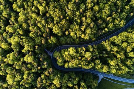 straat tussen grote bomen van bovenkant met drone luchtfoto, landschap Stockfoto