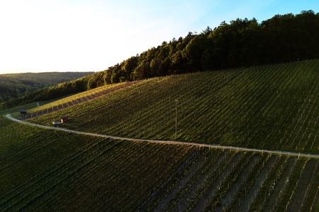 vineyards landscape on the hill from top with drone Stock Photo